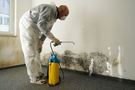 mold inspection tips